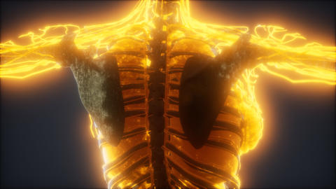 Colorful Human Body animation showing bones and organs Live Action