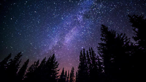 Twinkle stars at night in woods (forest). Milky way galaxy from Earth Videos animados