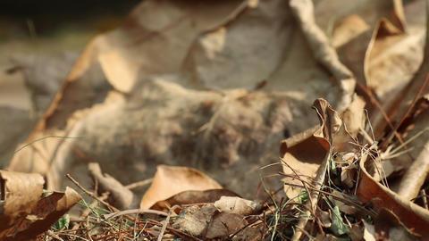 Autumn fallen leaves on the ground Acción en vivo