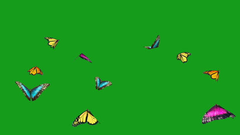 Flying colourful butterflies motion graphics with green screen background CG動画