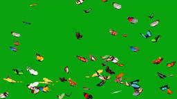 Flying colourful butterflies with green screen background CG動画