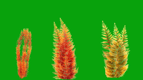 Underwater plants motion graphics with green screen background Videos animados