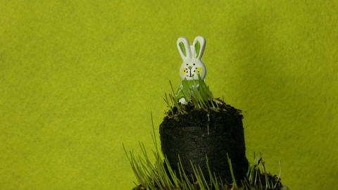 Easter bunny and growing grass time-lapse 1 Stock Video Footage