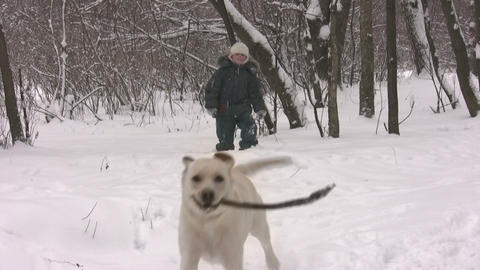 boy with dog in winter wood Footage