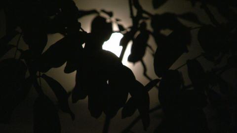 moon 25 Footage