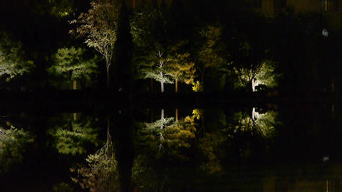 Woods reflection in calm water of lake.Such as mirror at dark evening night Footage