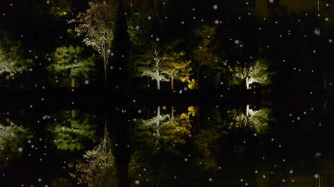 Woods reflection in calm water of lake.Such as mirror at dark evening night in w Footage