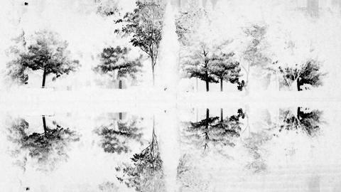 Woods reflection in calm water of lake.Such as mirror & white style Footage