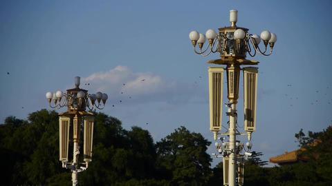 Flock of birds fly in blue sky,Surveillance cameras on... Stock Video Footage
