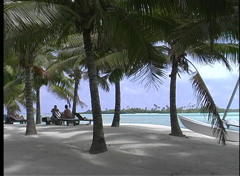 Palm trees providing shade on a white sandy beach on Rarotonga one of the Cook Islands in the South Footage