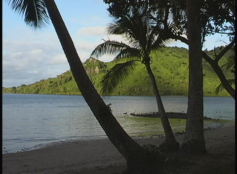 Silhouettes of palm trees overseeing a calm beach in the... Stock Video Footage