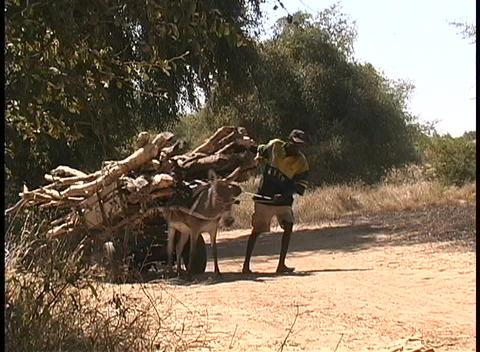 An African man walks alongside a donkey, leading it, as... Stock Video Footage