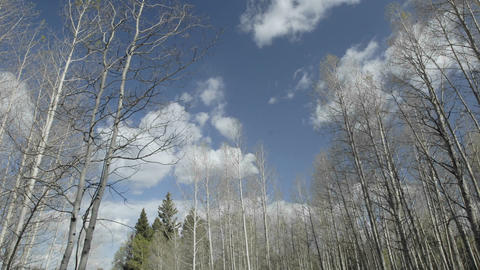 Time lapse of clouds passing over aspens trees in Hopewell Lake, New Mexico Footage
