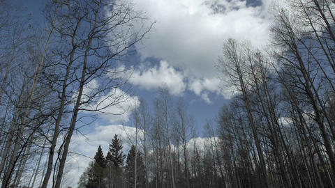 Time lapse of clouds passing over aspens trees in... Stock Video Footage