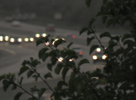 Foliage partially obscures the headlights of on-coming... Stock Video Footage