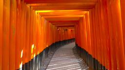 POV footage - Walking through torii gates at Fushimi-Inari Shrine, Kyoto, Japan Footage