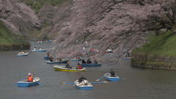 Visitors on rental boats enjoying blooming cherry blossoms fluttering in the win Footage