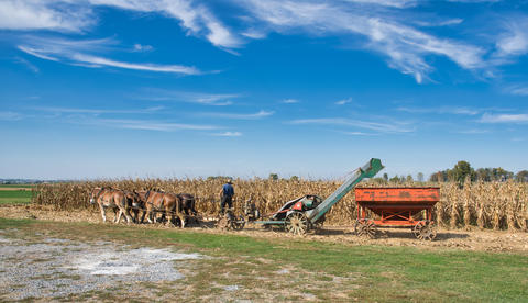 Amish farmer harvesting is corn with a team of horses pulling a gas engine powered harvester Fotografía