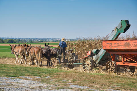 Amish farmer harvesting is corn with a team of horses pulling a gas engine powered harvester フォト