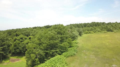 Hokkaido drone aerial view landscape tree 3 Live Action