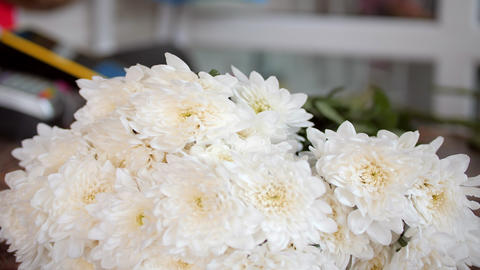 florist works with white chrysanthemums at table in shop Acción en vivo