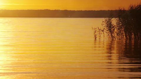 Sunset Landscape Background Live Action