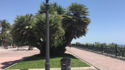 Tarragona, Spain, A palm tree Live Action