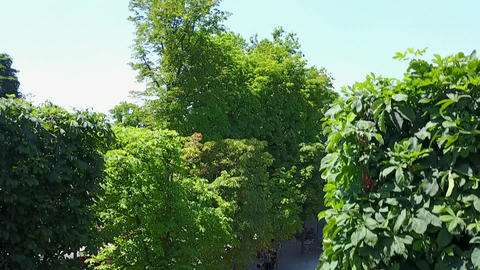 AERIAL: Beautiful Paris Cityscape revealing behind Trees in Summer sunshine Live Action