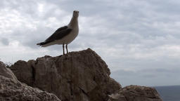 Seagull flying on and off a rock near the sea Footage