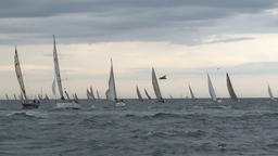 Sail boats on the sea and seagull flying Footage