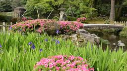 Kenrokuen Garden, Kanazawa City, Ishikawa Prefecture, Japan Footage