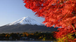 Mount Fuji and Autumn Leaves, Yamanashi Prefecture, Japan Footage