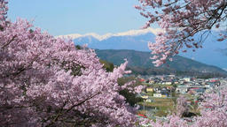 Cherry blossoms, Nagano Prefecture Footage