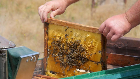 Installing a Honey Frame in a Beehive Live Action