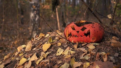 Old pumpkin lantern after Halloween in forest with insects Live Action