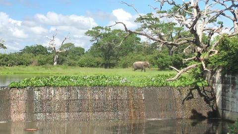 Yala, Sri Lanka, elephants came to the watering hole part 2 Live Action