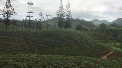 Ella, Sri Lanka, mountains and hills Live Action