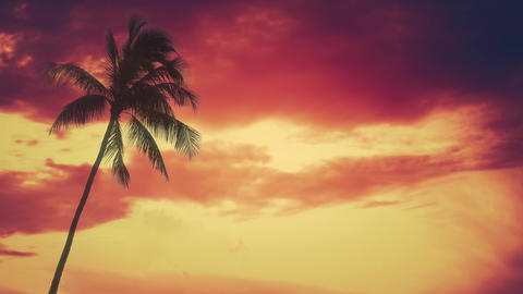 Single Palm Tree Against Vibrant Hawaii Sunset Live Action