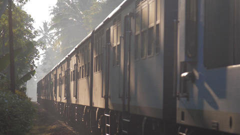 train moves among jungle transporting labor migrants Live Action