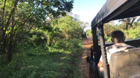 Yala, Sri Lanka, November 30, 2019, tourists in jeeps waiting for animals Live Action