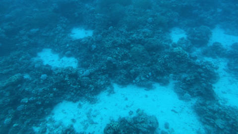 Eilat, Israel - at the depths of the Red Sea through the porthole part 11 Live Action