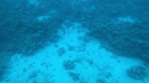 Eilat, Israel - at the depths of the Red Sea through the porthole part 16 Live Action