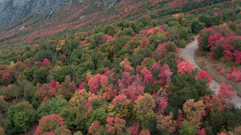 Aerial rolling view looking looking down at the colorful foliage Live Action