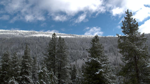 Panning view through tree tops viewing snow covered forest Live Action