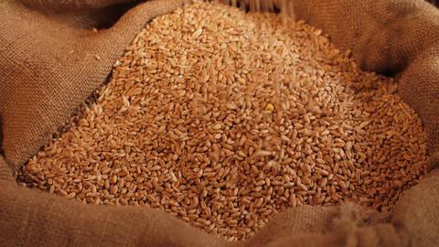 Wheat grains pouring in a bag Acción en vivo