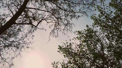 Tops of trees and sky during midseason as nature, landscape and natural Live Action