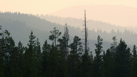 Zoomed view of forest layers fading in the distance Live Action