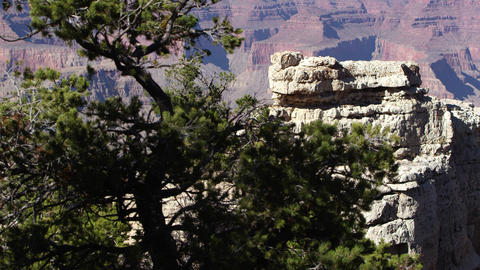 Panning view through Juniper tree viewing rocks from South Rim Live Action