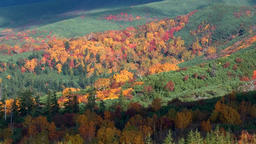 Autumn foliage, Hokkaido, Japan Footage