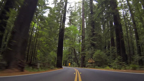 Through Humboldt Redwoods State Park Footage